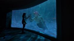 Nueva jaula de King Shark