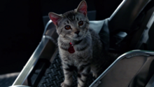 Zari Tomaz as a cat