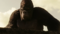 Grodd watching Flash vs Solovar.png