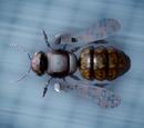 Robotic bees