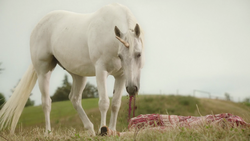 Unicorn eating a Woodstock hippie's heart