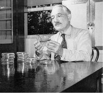 Selman Abraham Waksman (1888-1973)