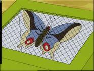 Bigbluebutterfly02