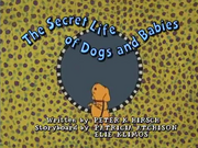 The Secret Life of Dogs and Babies Title Card