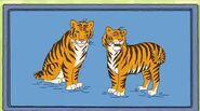 Getsmart - hugo startup - siberian tigers