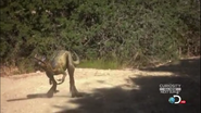 Baby Allosaurus
