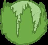 Lettuce Body 1