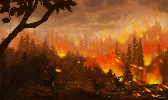 289020 wartynewt forest-fire