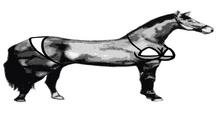 Sexy Horse Short