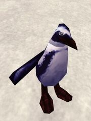 Augmented Penguin Live