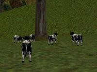 38.2S, 68.4E - Farmer's Herd Live