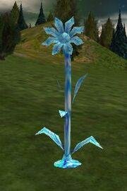 Snowflower Live
