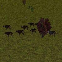 11.5N, 37.9E - Auroch Herd Live