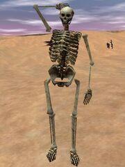 Skeleton Live