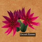 Desert Flower Live