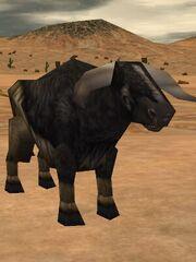 Auroch Fire Bull Live