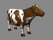 Cattle small