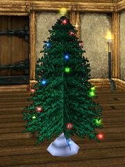 Little Pine Tree Live