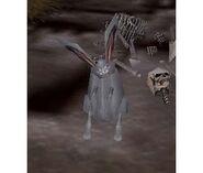 White Rabbit Live 2