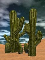 21.6S, 9.7E - Cactus Stand Live