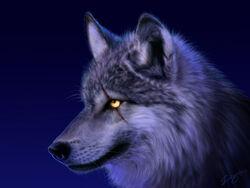 9 wolf