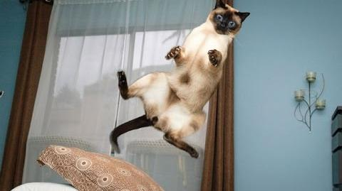 HILARIOUS!! Cat Jump Fails