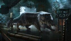 Balerion the cat