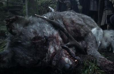 DeadDirewolf