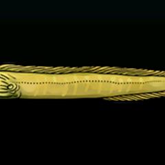 绿裸胸鳝 - 稀有度:稀有,尺寸:小