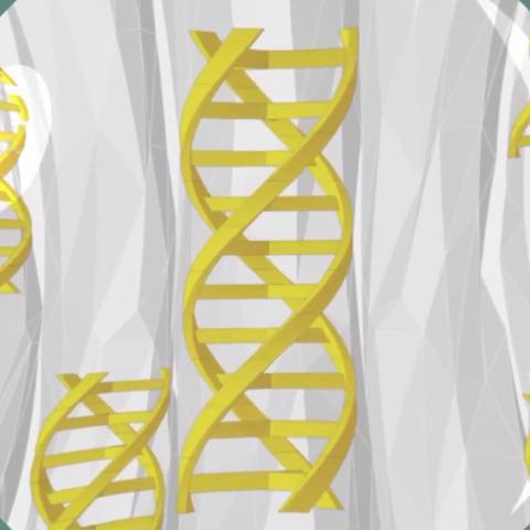 Gènes à <b>triples hélices</b>
