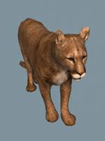 Puma animus