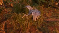 Ibis-origins