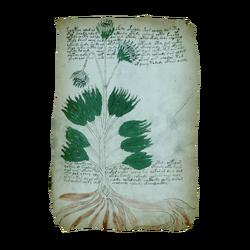 AC4BF Voynich Manuscript - Folio 34r