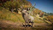 ACOd-deer1