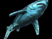 AC4 Grand requin blanc