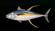 YellowfinTunaACP