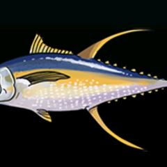 Yellowfin Tuna - 稀有度:稀有,尺寸:中