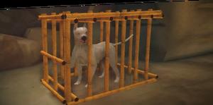 ACCC base de données chiens