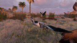 Herons-origins