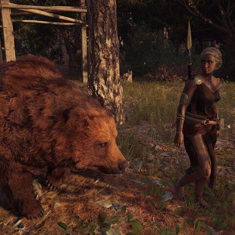 涅塞阿与她的熊漫步在森林里