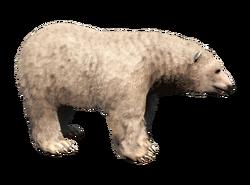 ACRO Ours blanc polaire