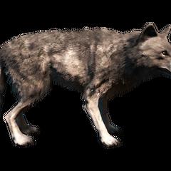 <b>Loup gris</b> dans <i><a href=