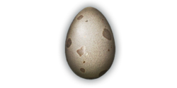Alligator Egg