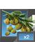 PL olives 2