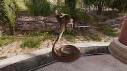 Snake-origins