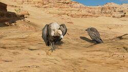 Vulture-origins