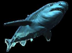 AC4DB - Bull Shark
