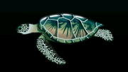GreenSeaTurtleACP