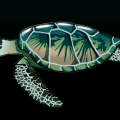 Green sea turtle - Rarity: Very Rare, Size: Large