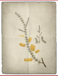 ACS Mimosa BDA